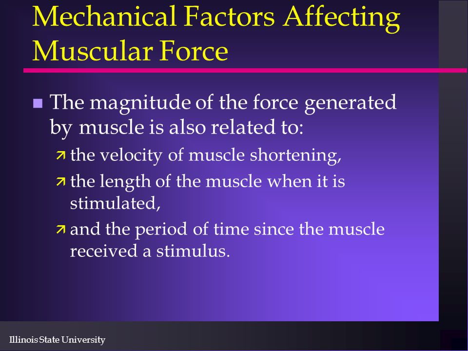Mechanical Factors Affecting Muscular Force