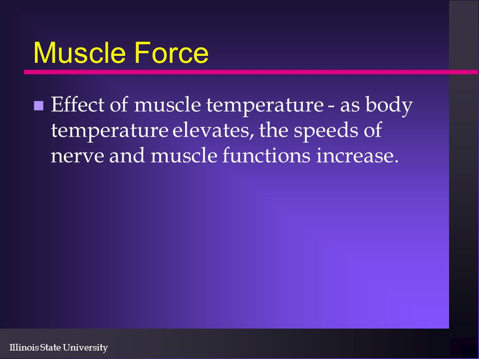 Muscle Force Effect of muscle temperature - as body temperature elevates, the speeds of nerve and muscle functions increase.