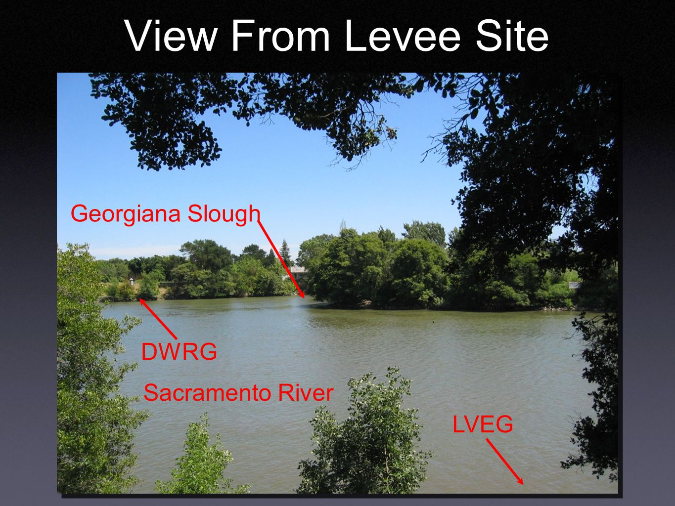 View From Levee Site Georgiana Slough Sacramento River DWRG LVEG