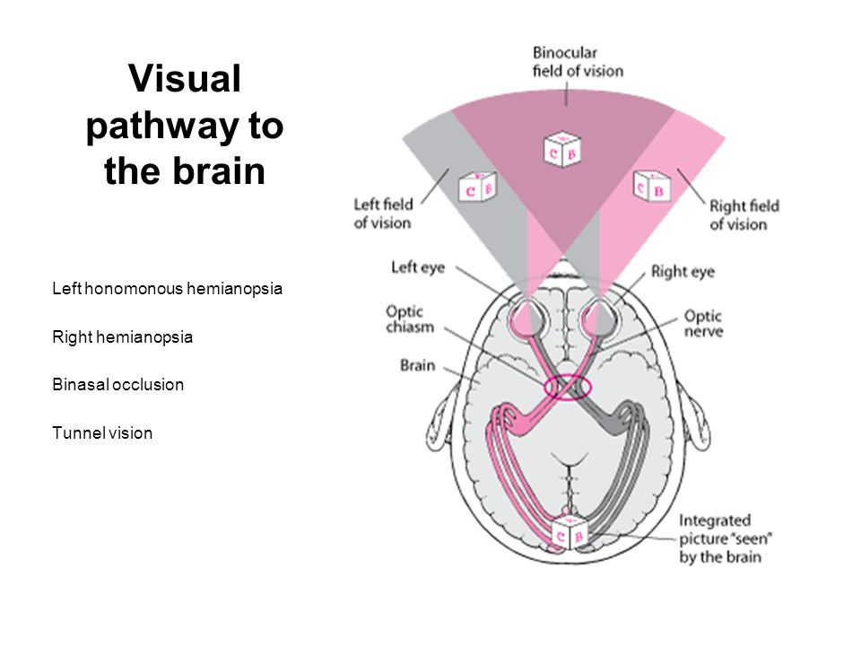 Visual pathway to the brain