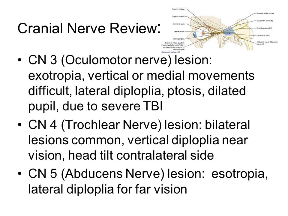 Cranial Nerve Review: