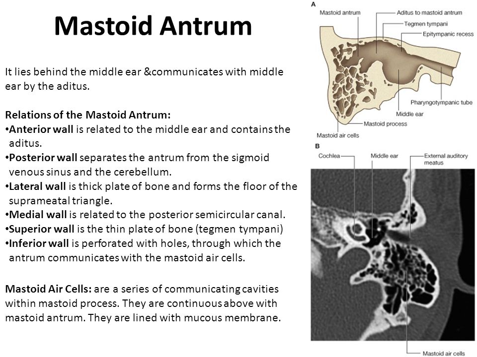 Mastoid Antrum It lies behind the middle ear &communicates with middle ear by the aditus. Relations of the Mastoid Antrum: