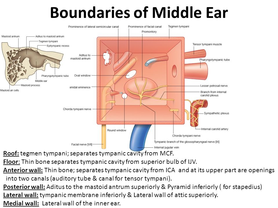 Boundaries of Middle Ear