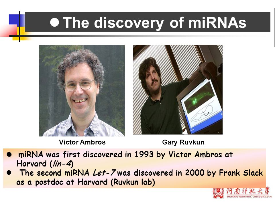 The discovery of miRNAs