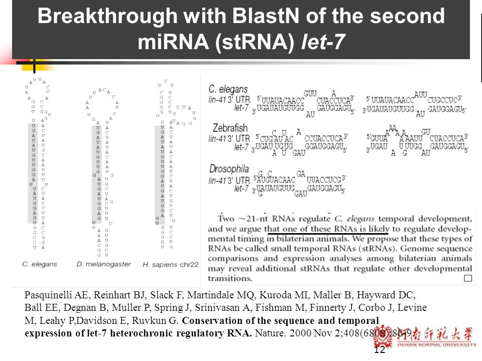 Breakthrough with BlastN of the second miRNA (stRNA) let-7