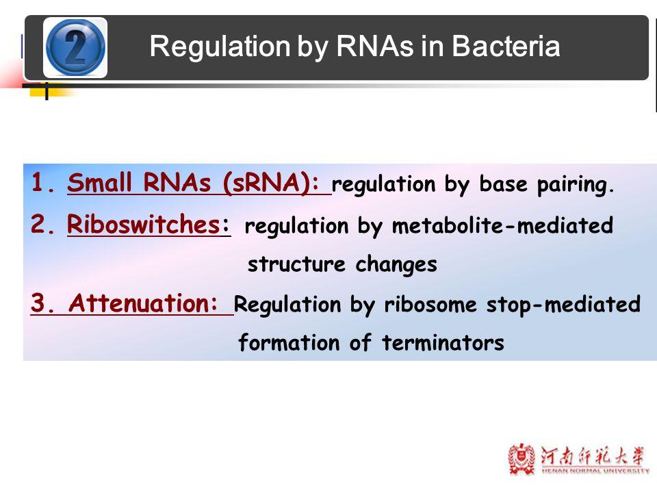 Regulation by RNAs in Bacteria