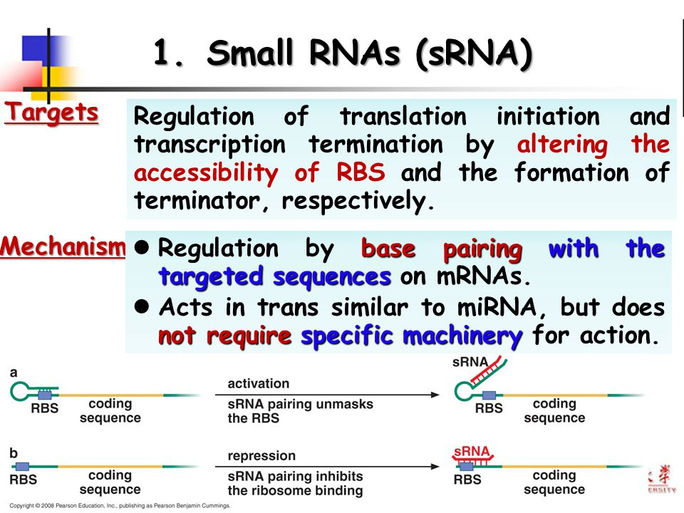 Small RNAs (sRNA) Targets