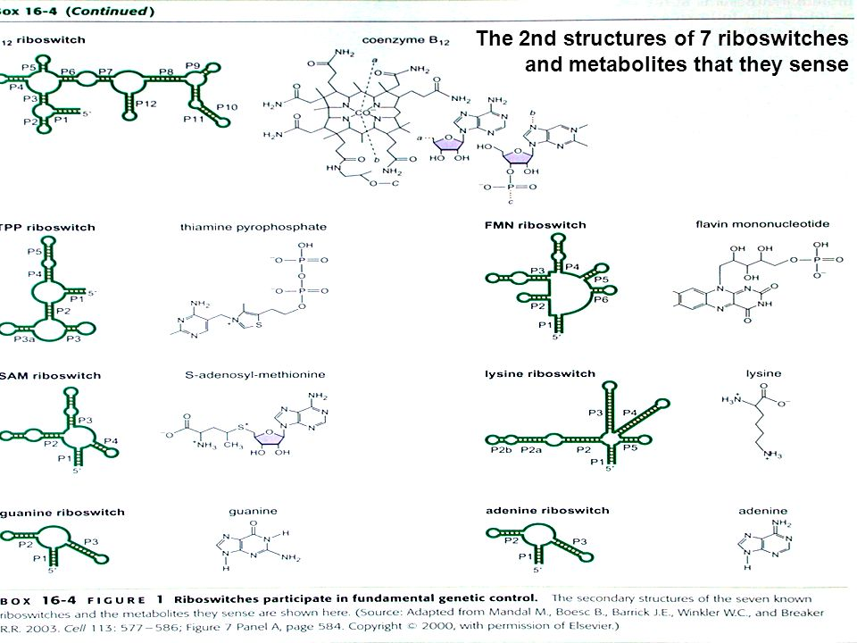 The 2nd structures of 7 riboswitches and metabolites that they sense