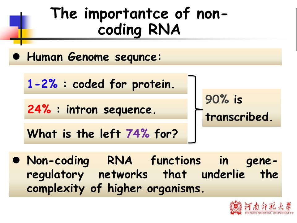 The importantce of non- coding RNA