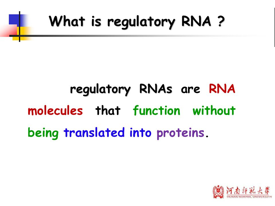 What is regulatory RNA regulatory RNAs are RNA molecules that function without being translated into proteins.