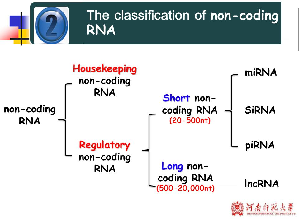 Housekeeping non-coding RNA