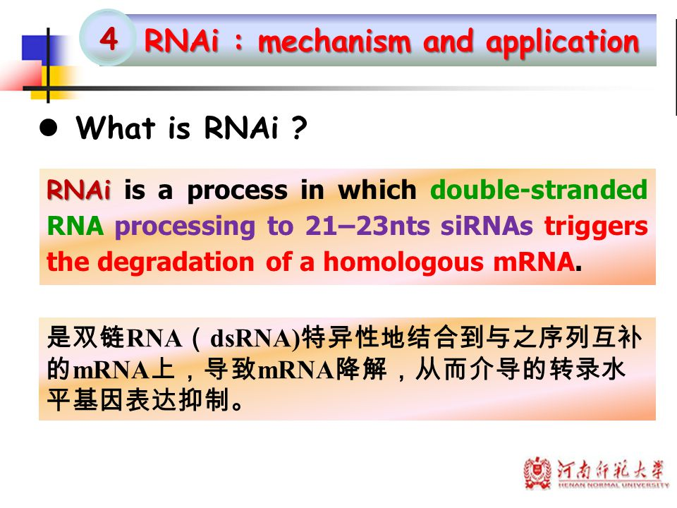 RNAi : mechanism and application