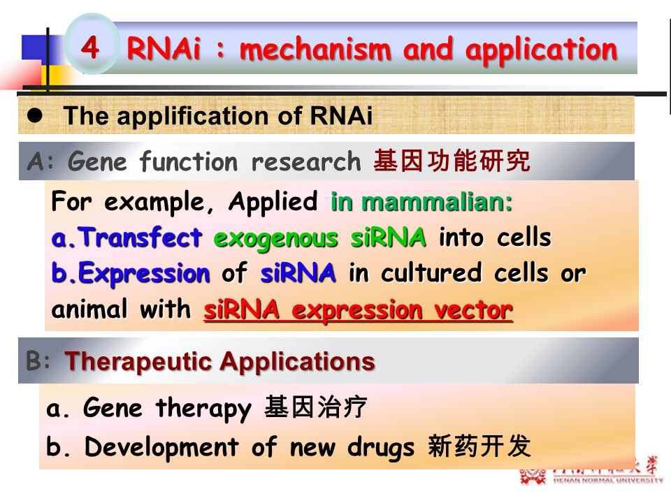 RNAi : mechanism and application 4