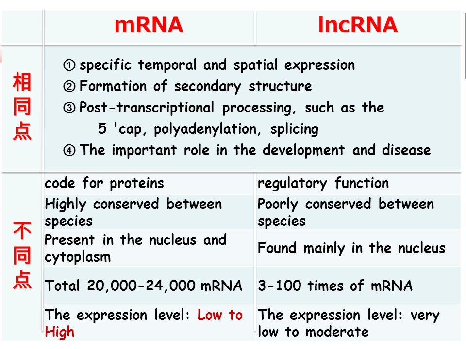 mRNA lncRNA 相 同 点 不 specific temporal and spatial expression