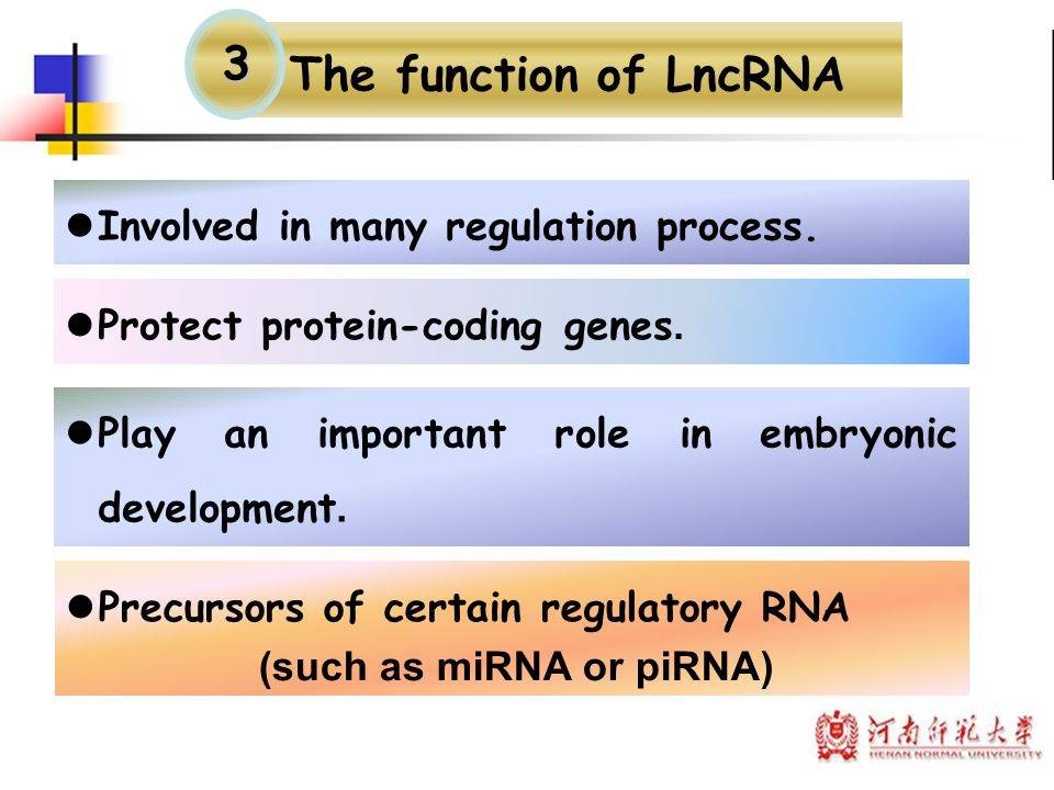 The function of LncRNA 3 Involved in many regulation process.