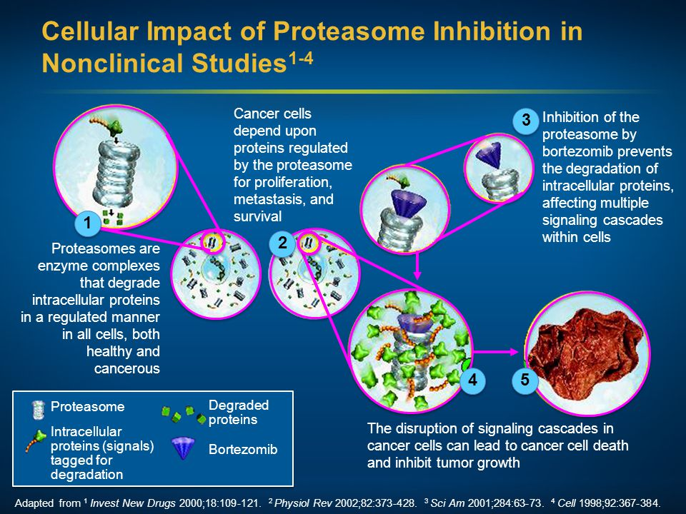 Cellular Impact of Proteasome Inhibition in Nonclinical Studies1-4