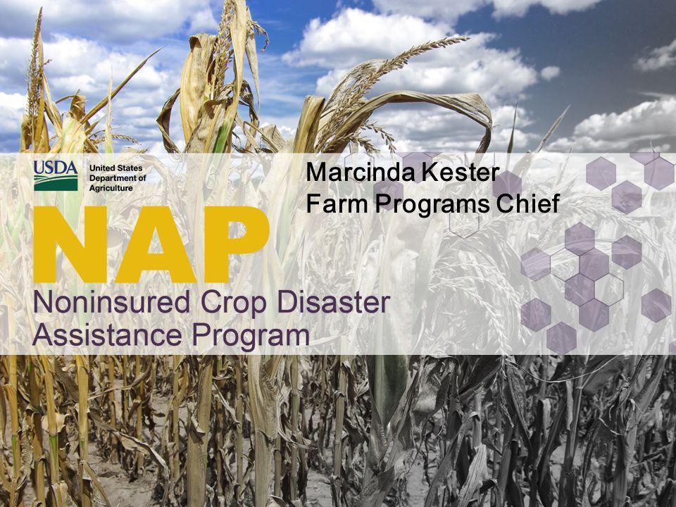 Marcinda Kester Farm Programs Chief