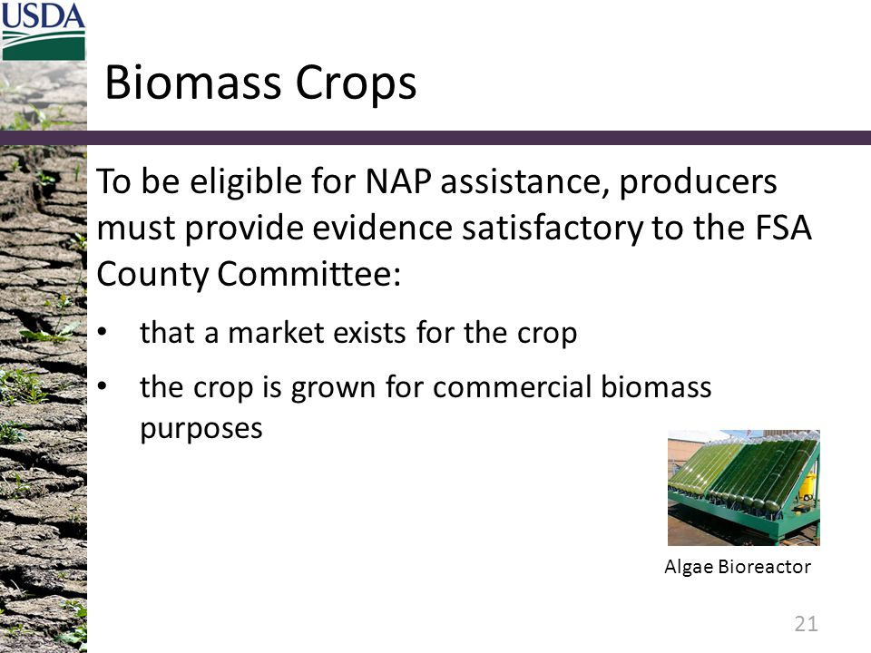 Biomass Crops To be eligible for NAP assistance, producers must provide evidence satisfactory to the FSA County Committee: