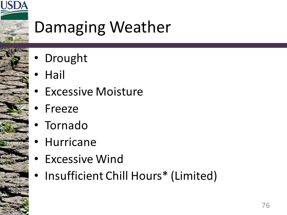 Damaging Weather Drought Hail Excessive Moisture Freeze Tornado