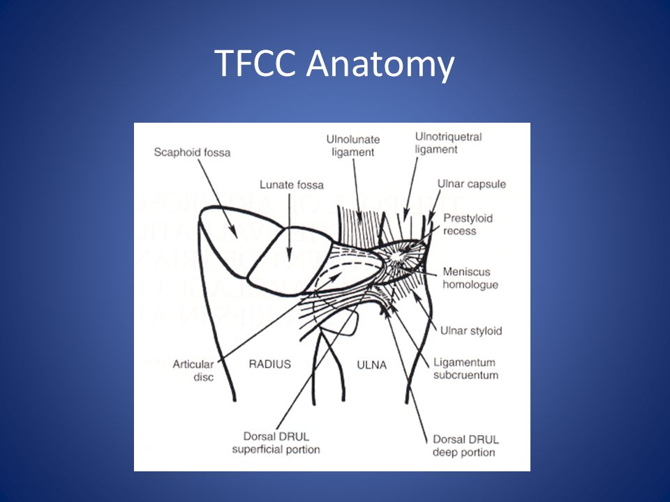 TFCC Anatomy