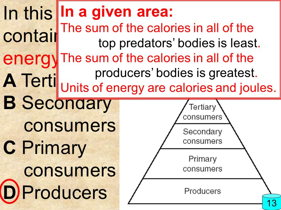 In this food pyramid, which level contains the greatest amount of energy