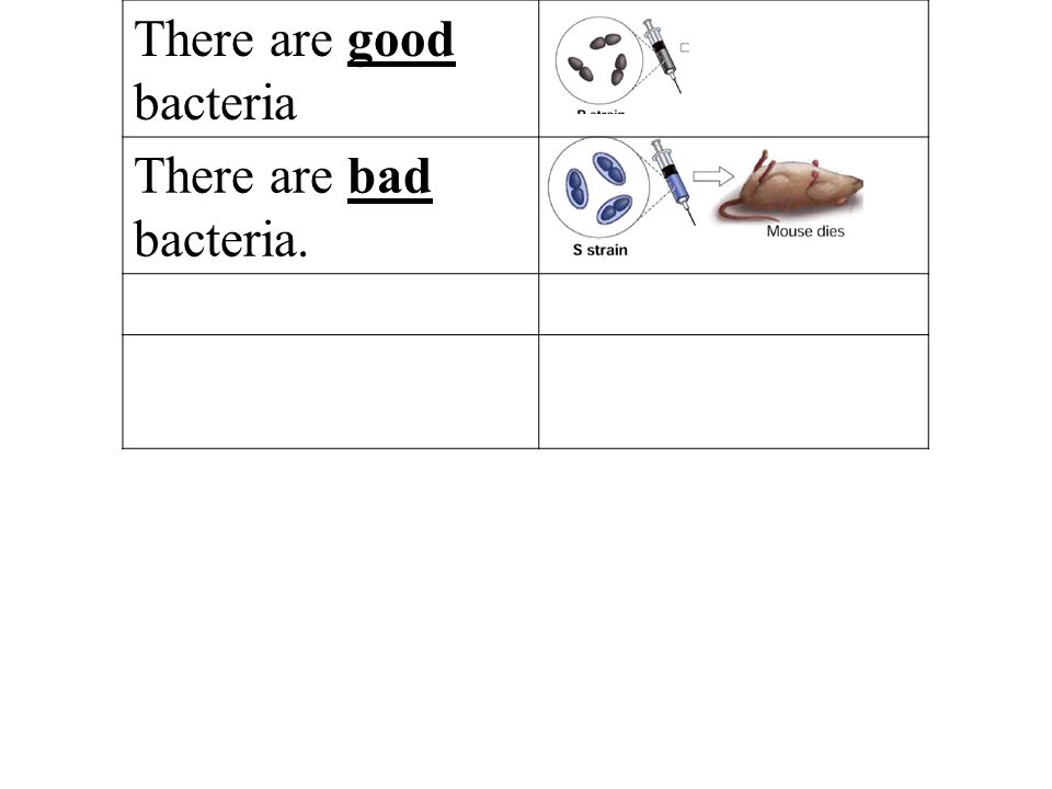 There are good bacteria