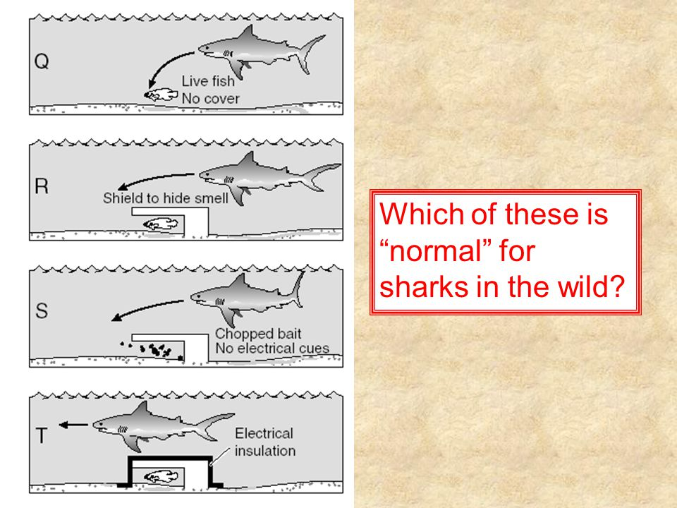 Which of these is normal for sharks in the wild