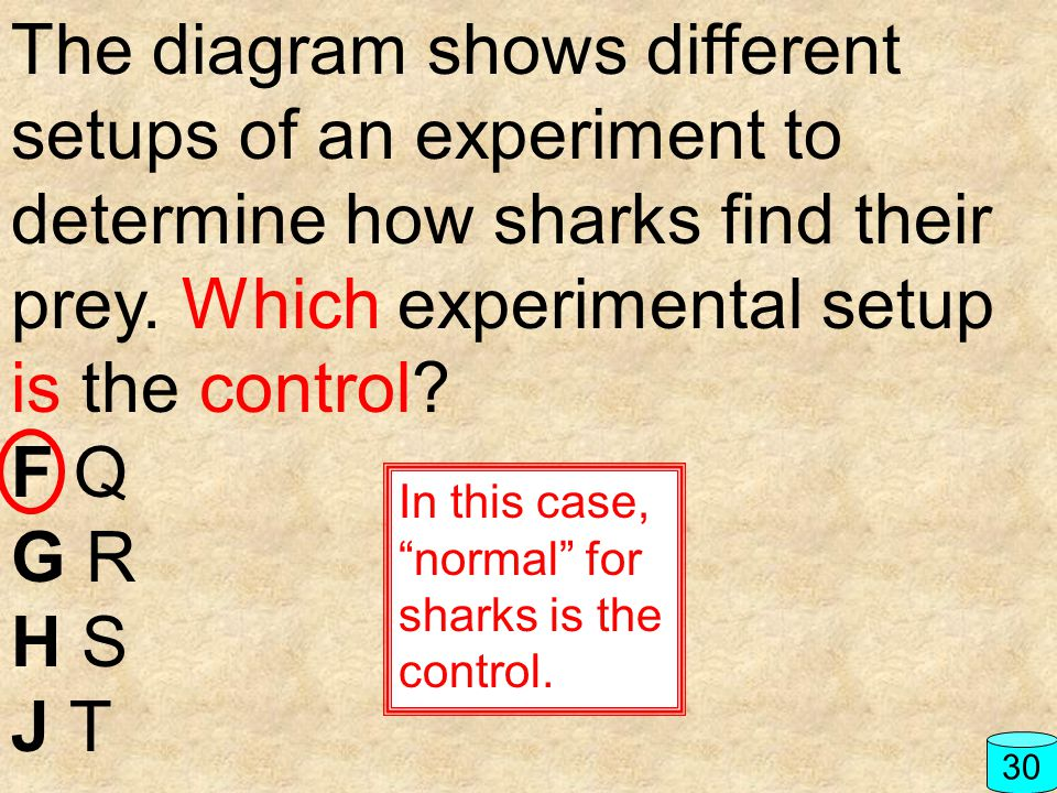 The diagram shows different setups of an experiment to determine how sharks find their prey. Which experimental setup is the control
