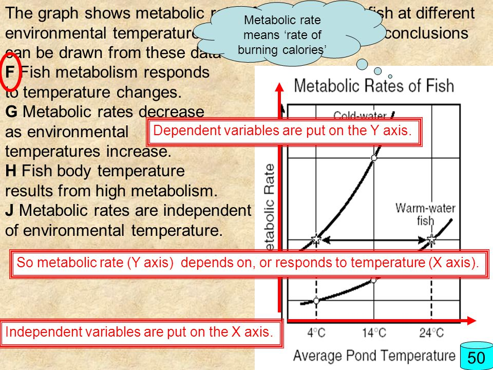 Metabolic rate means 'rate of burning calories'