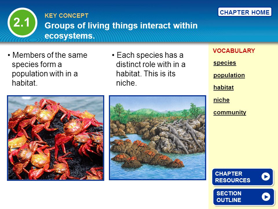 Groups of living things interact within ecosystems.