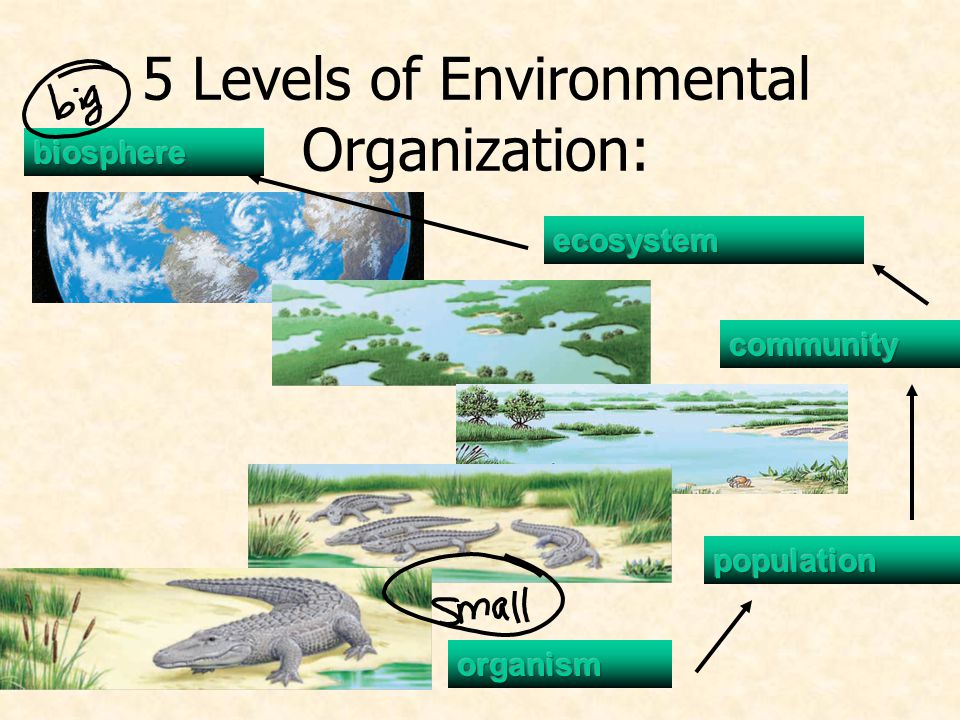 5 Levels of Environmental Organization:
