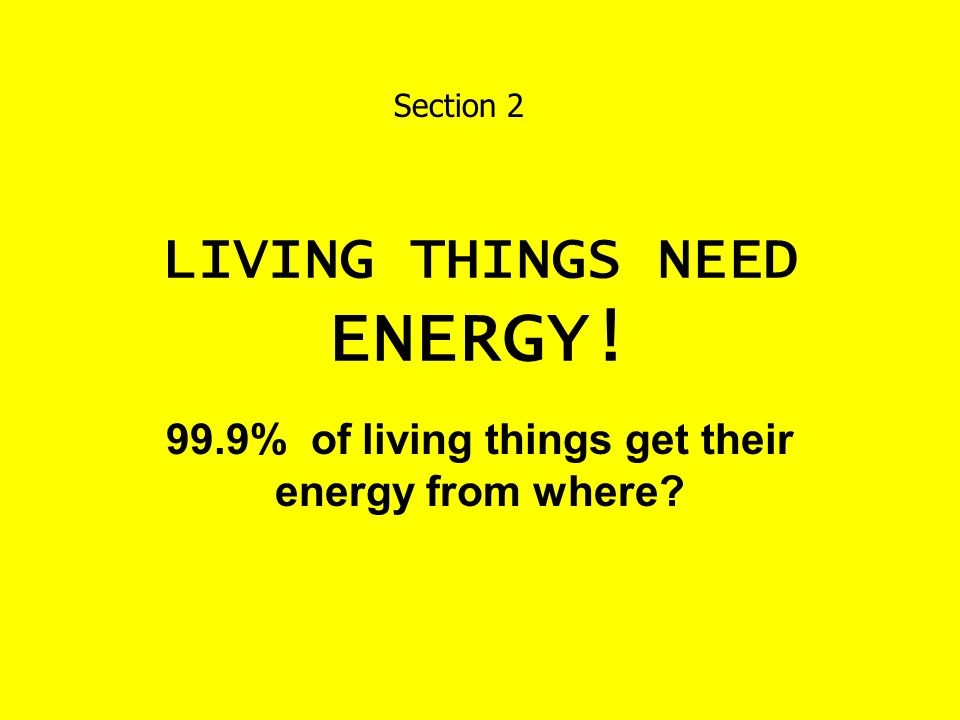 LIVING THINGS NEED ENERGY!