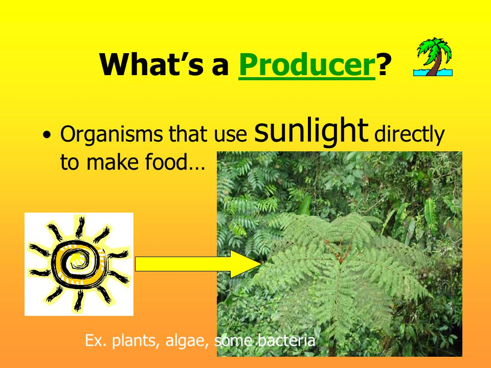 What's a Producer Organisms that use sunlight directly to make food…