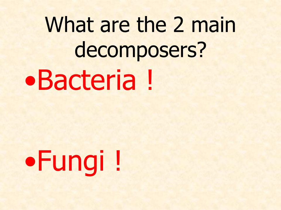 What are the 2 main decomposers