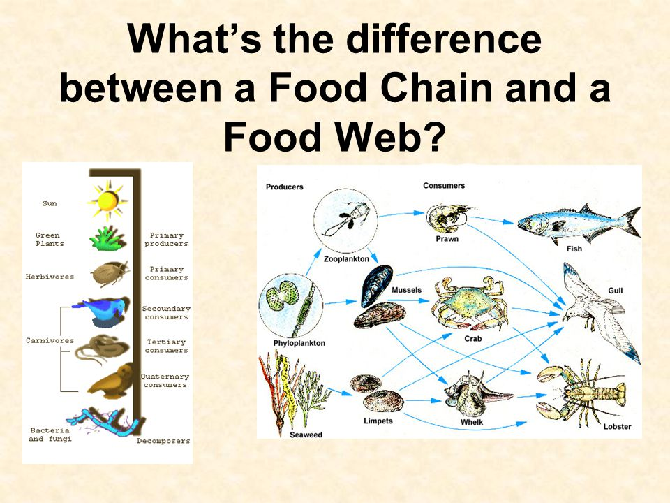 What's the difference between a Food Chain and a Food Web