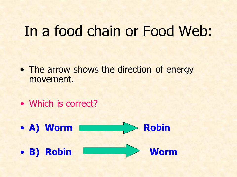 In a food chain or Food Web: