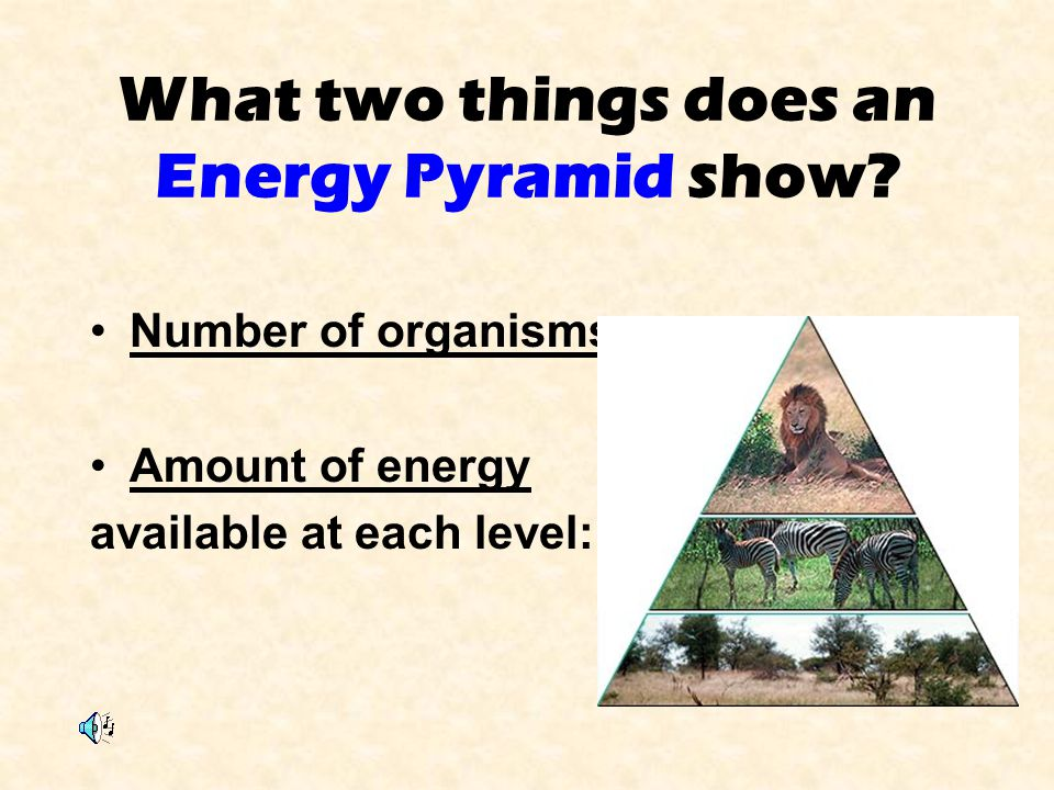 What two things does an Energy Pyramid show