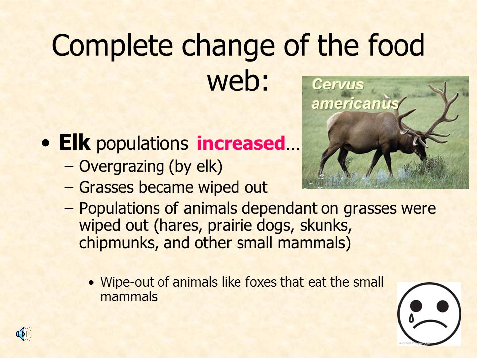 Complete change of the food web: