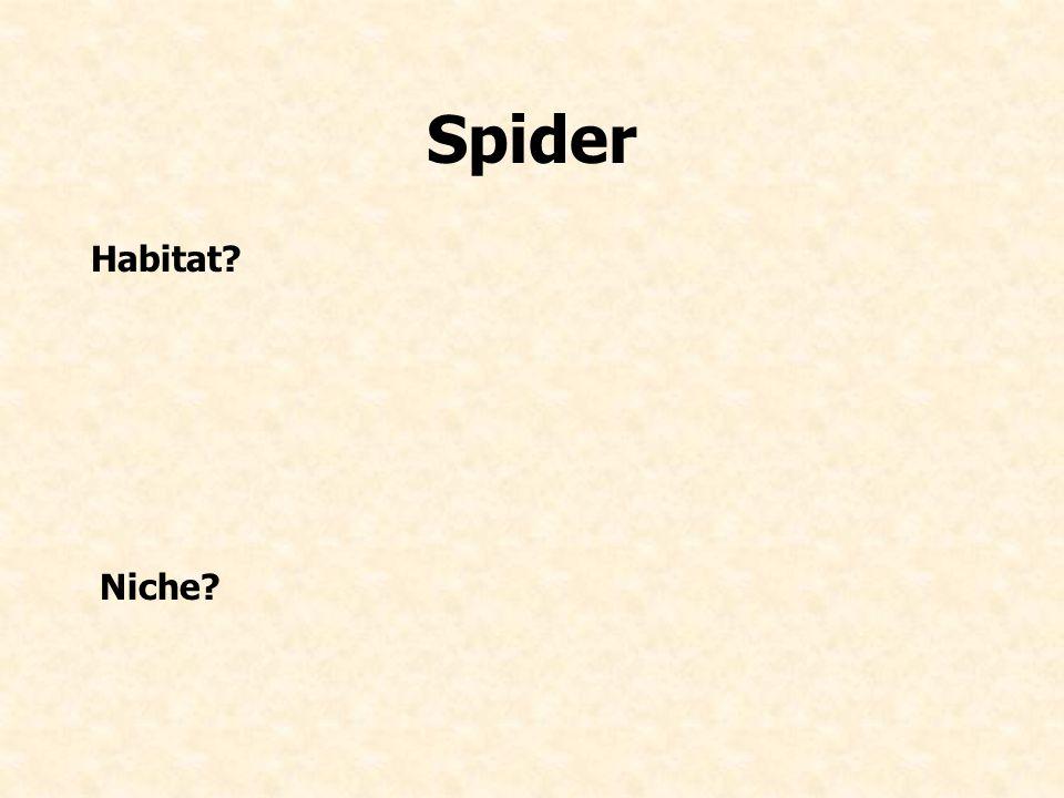 Spider Habitat Niche