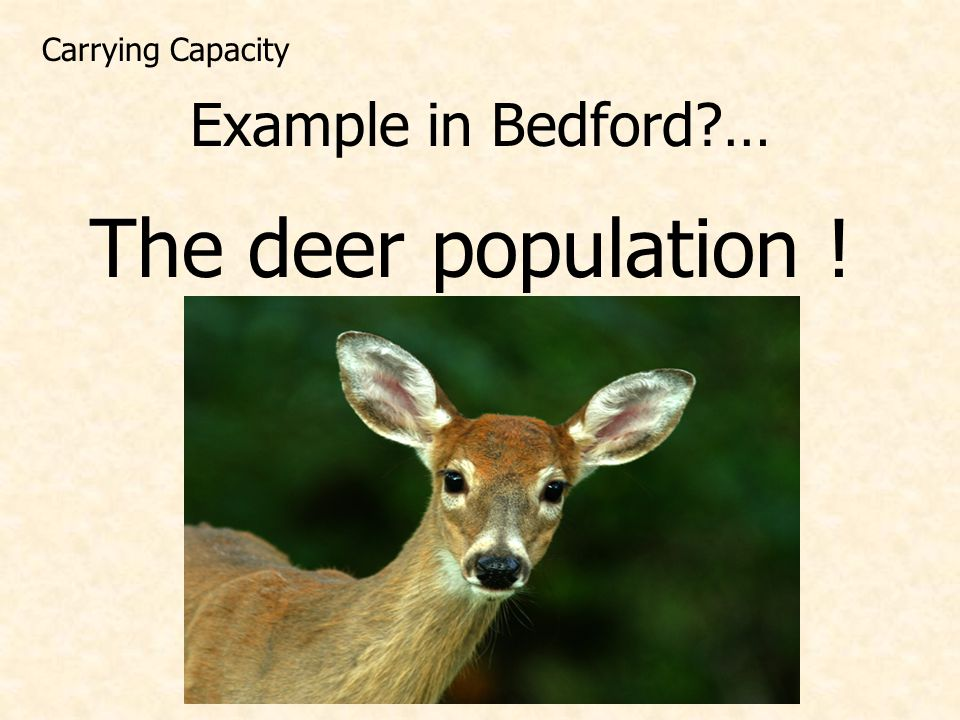 Carrying Capacity Example in Bedford … The deer population !