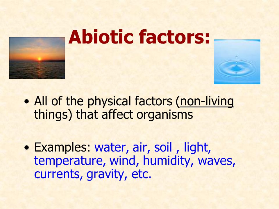 Abiotic factors: All of the physical factors (non-living things) that affect organisms.