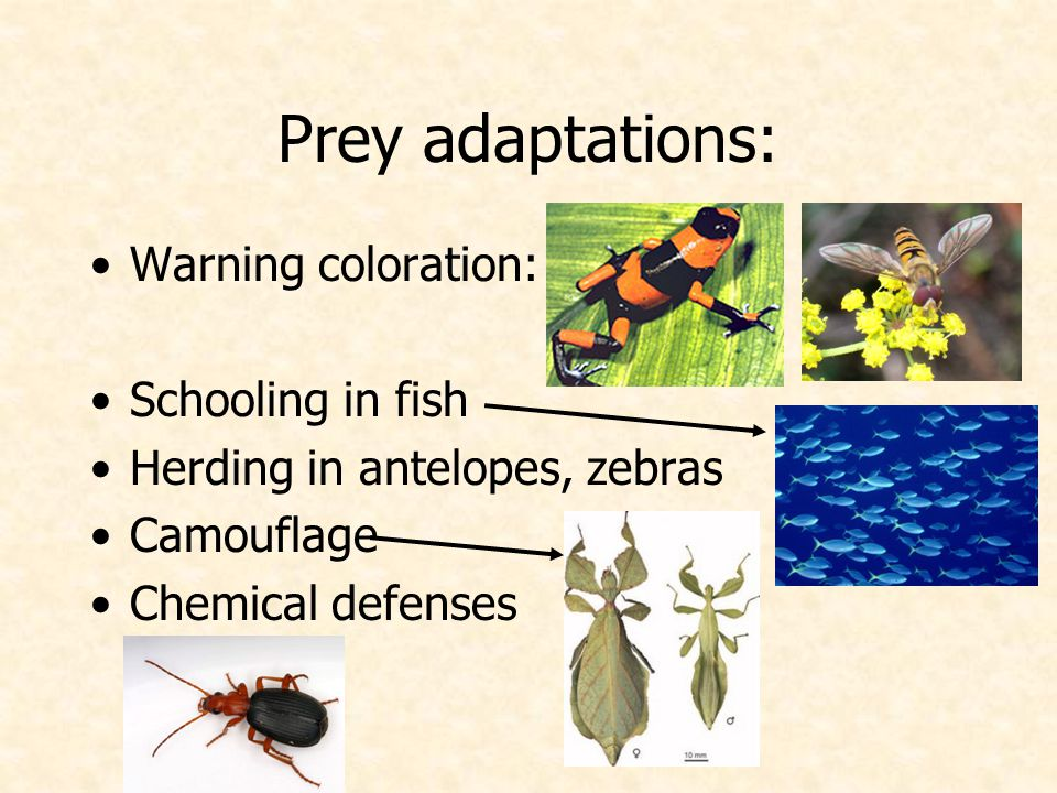 Prey adaptations: Warning coloration: Schooling in fish