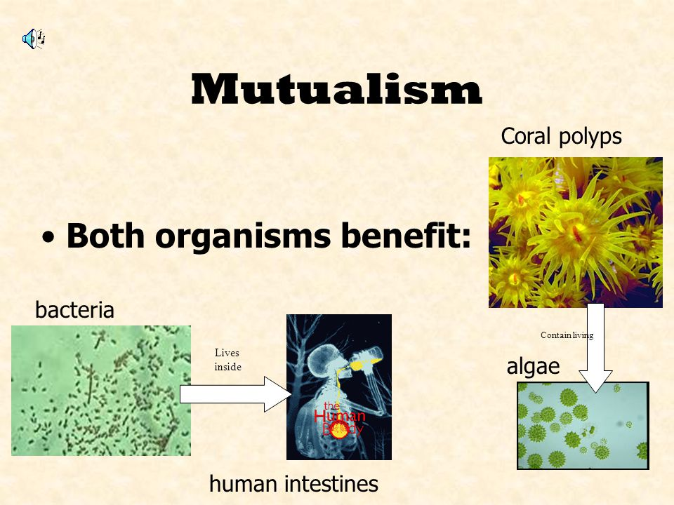 Mutualism Both organisms benefit: Coral polyps bacteria algae