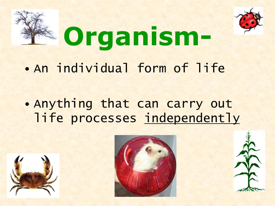 Organism- An individual form of life