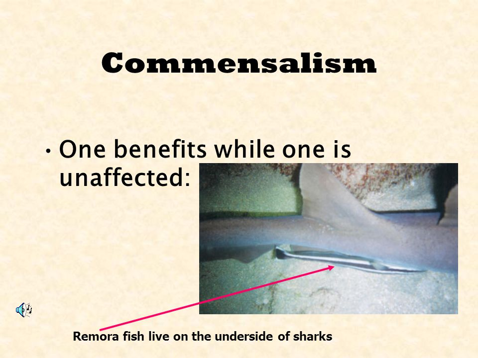 Commensalism One benefits while one is unaffected:
