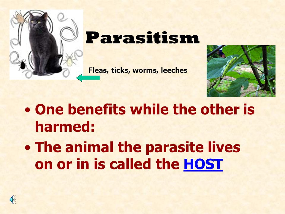 Parasitism One benefits while the other is harmed: