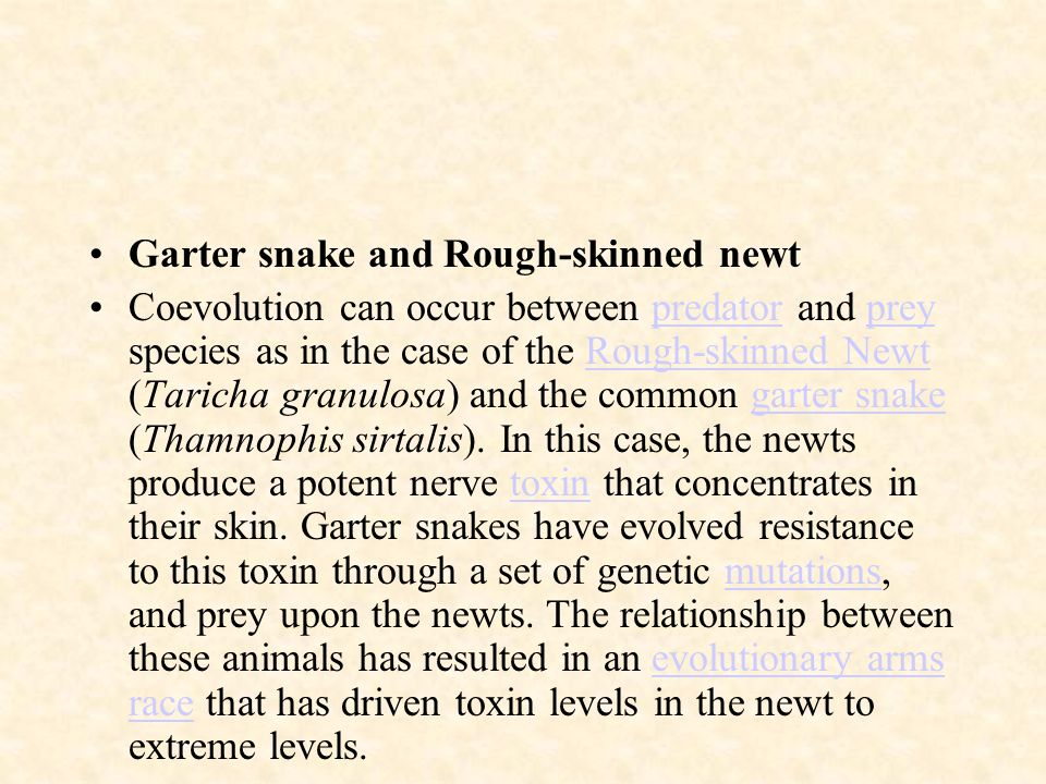 Garter snake and Rough-skinned newt