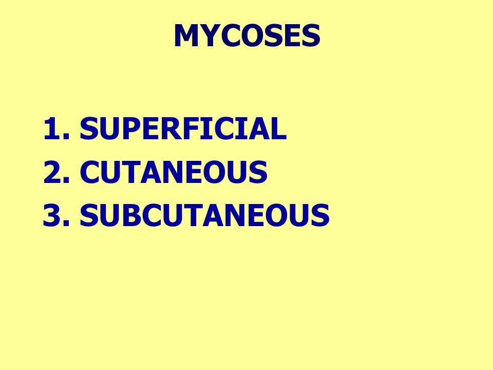 MYCOSES 1. SUPERFICIAL 2. CUTANEOUS 3. SUBCUTANEOUS