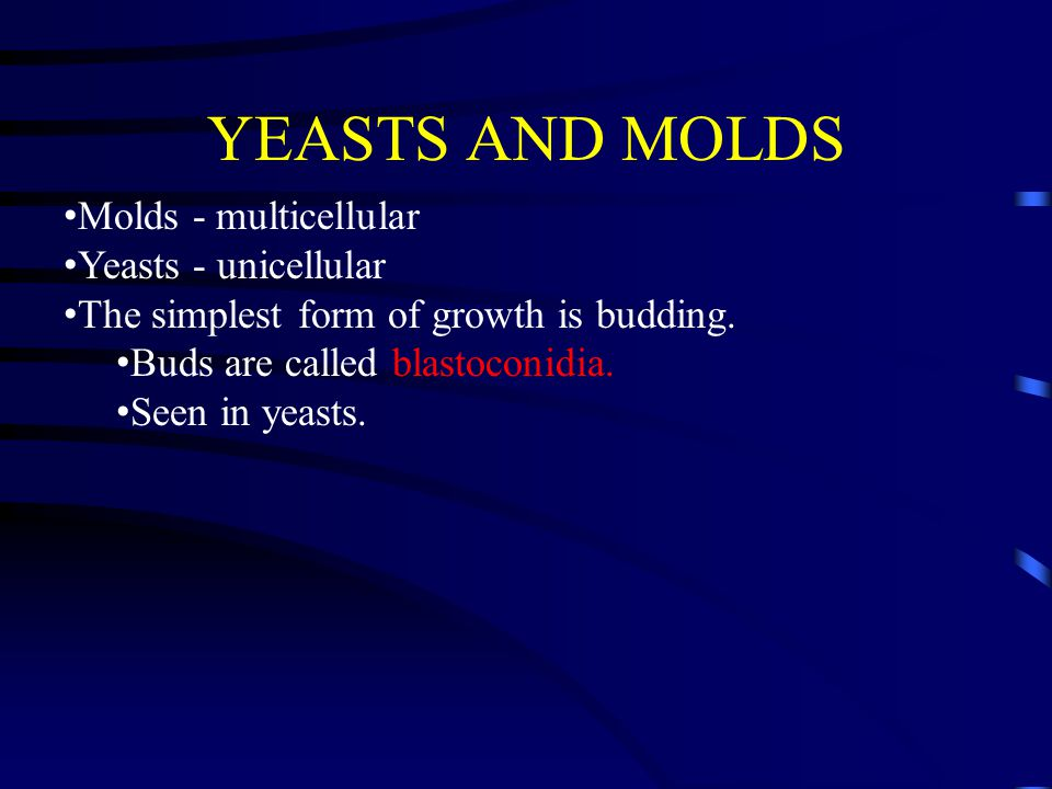YEASTS AND MOLDS Molds - multicellular Yeasts - unicellular