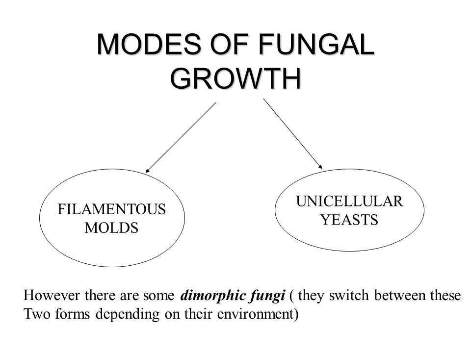 MODES OF FUNGAL GROWTH UNICELLULAR FILAMENTOUS YEASTS MOLDS
